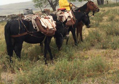 Mule Pack Train